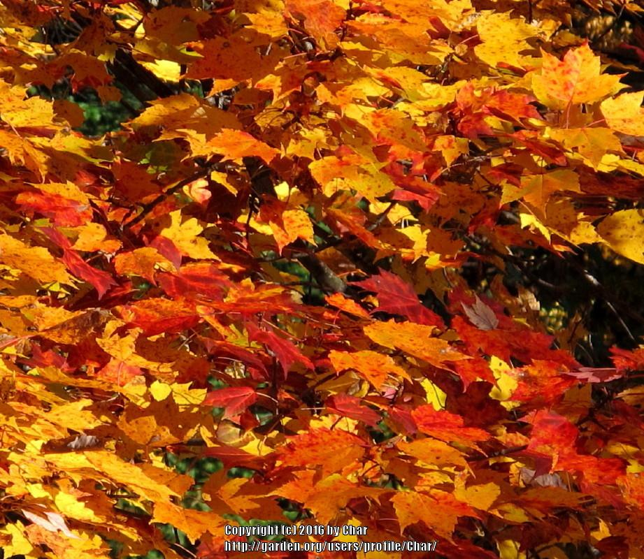 Things Do Fall Leaves