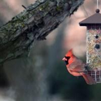 A cardinal moment . . .