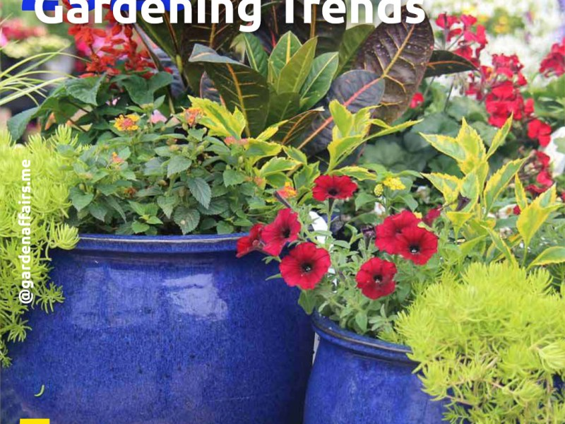 5 Landscaping Trends in 2020 | 5: Container Gardening