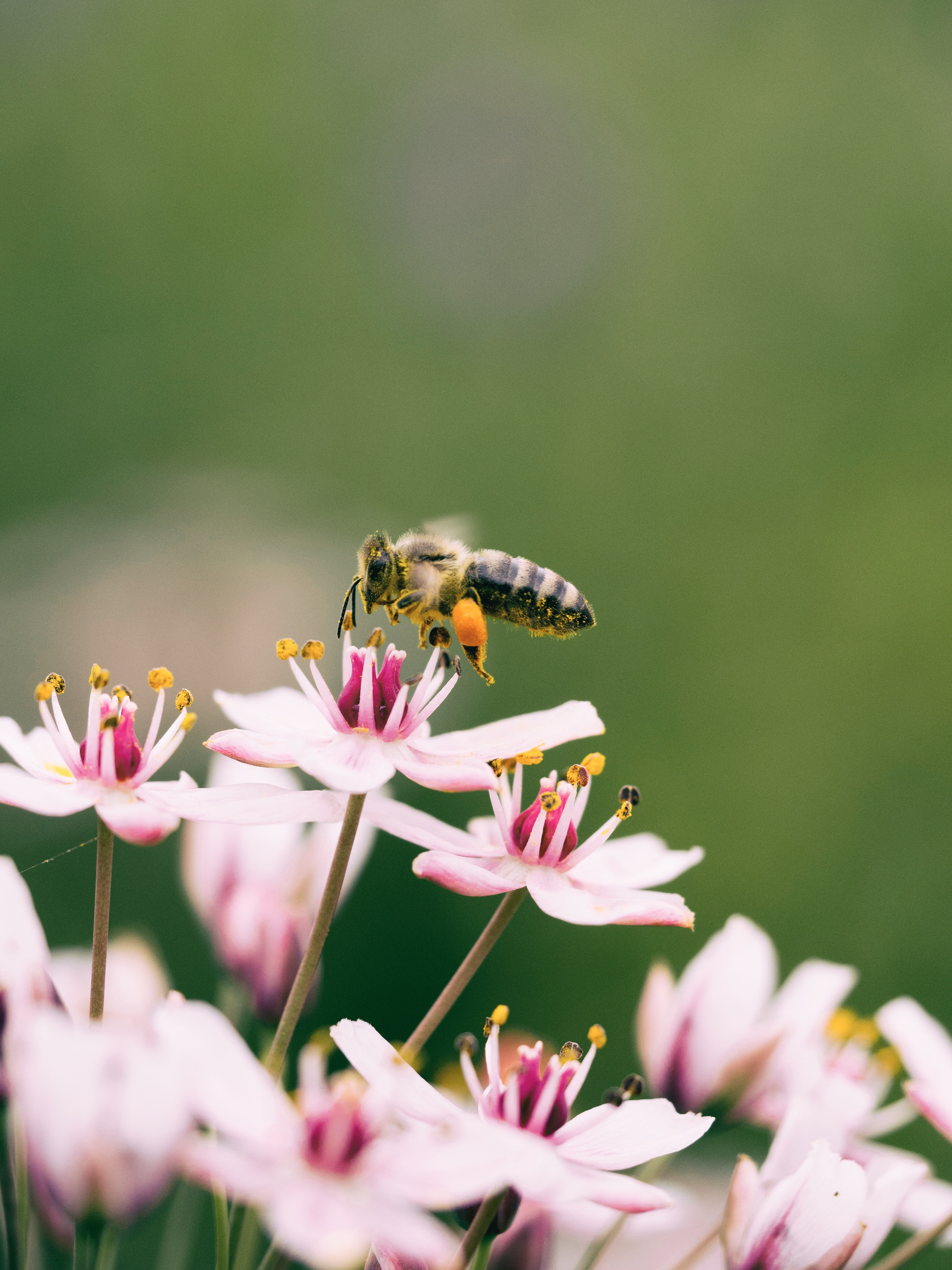 How to Choose the Most Helpful Flowers for Your Pollinator Garden