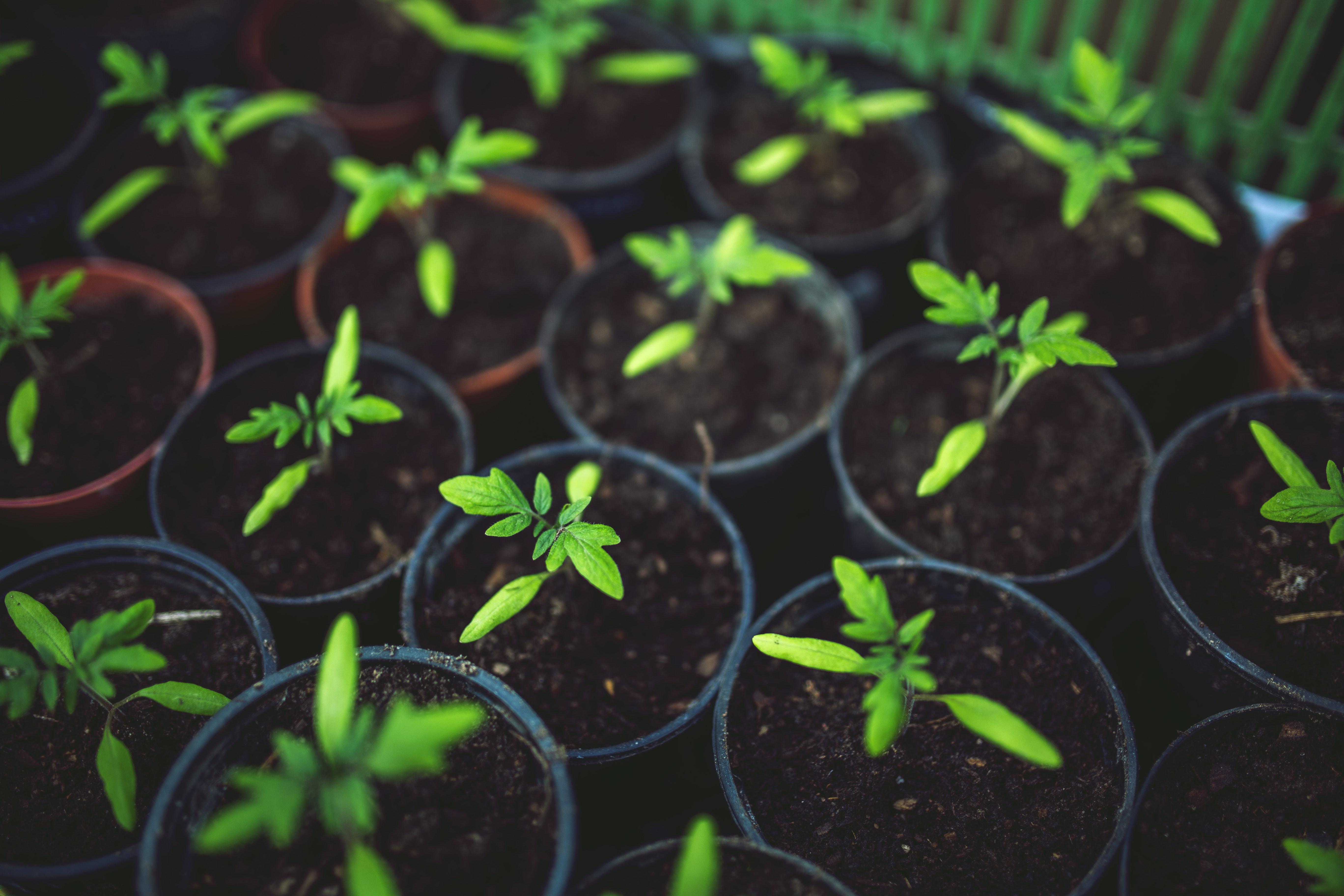Growing Vegetables in Pots: 20 of the Best Container Varieties