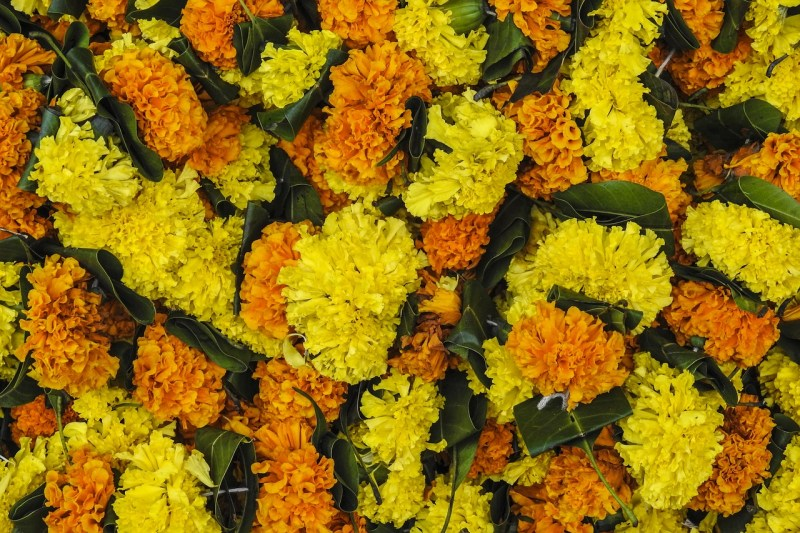 Marigold torana