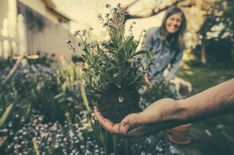 Raised Bed Soil and Seedlings