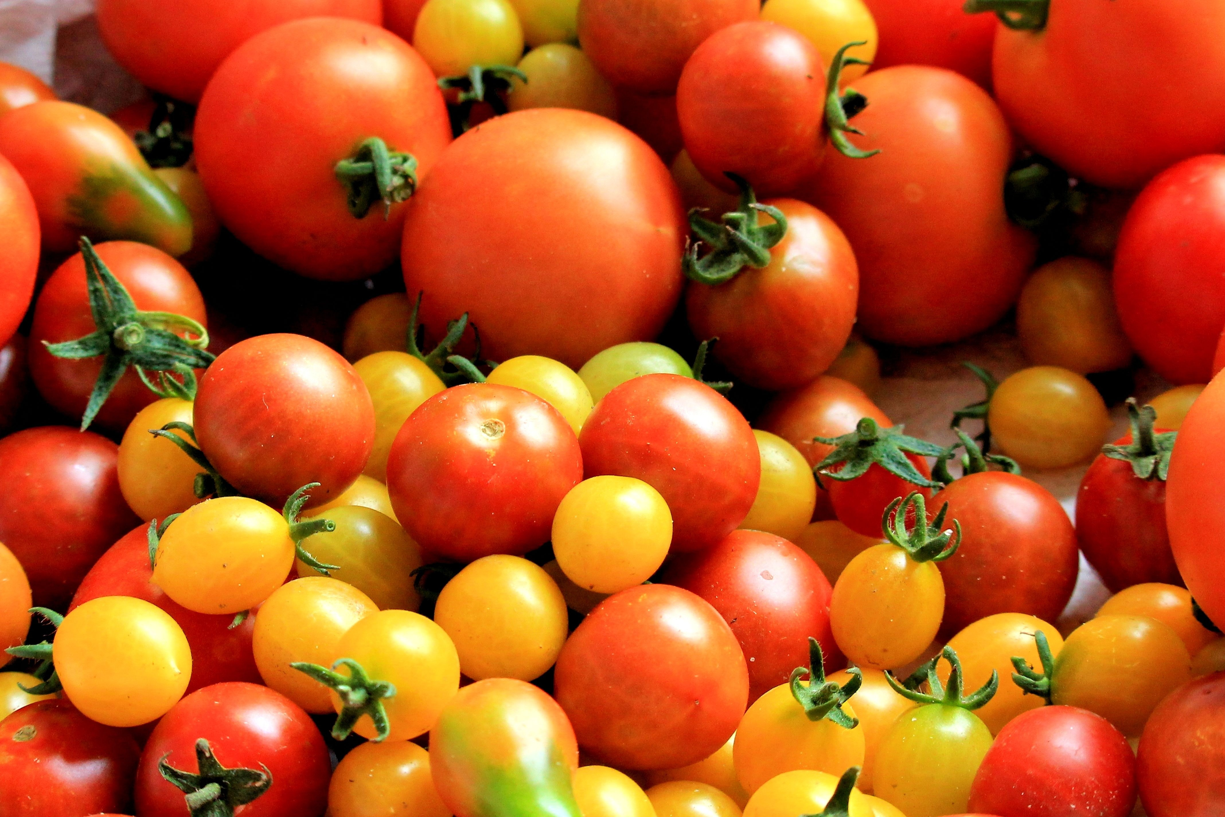 Totally Tomatoes! 28 Spectacular Tomato Varieties to Explore