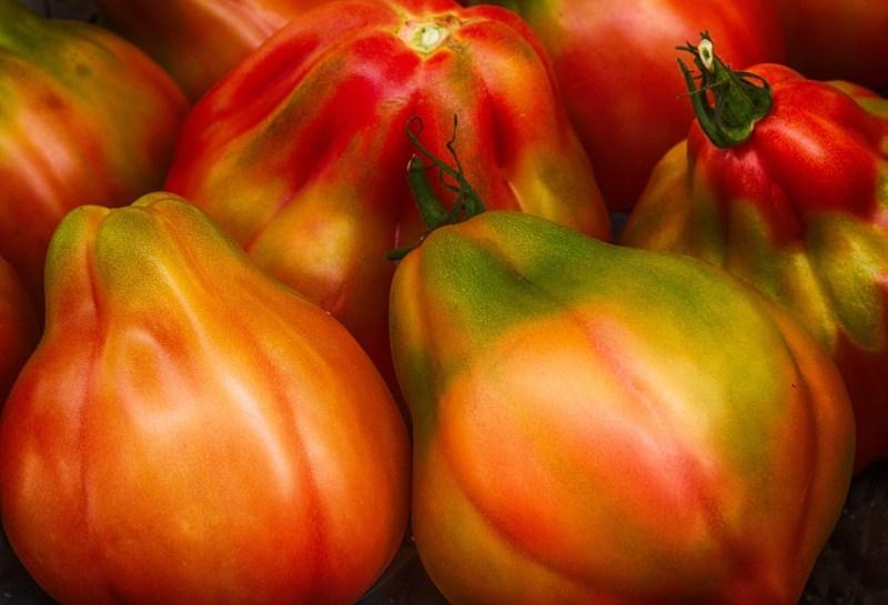 orange Russian tomato