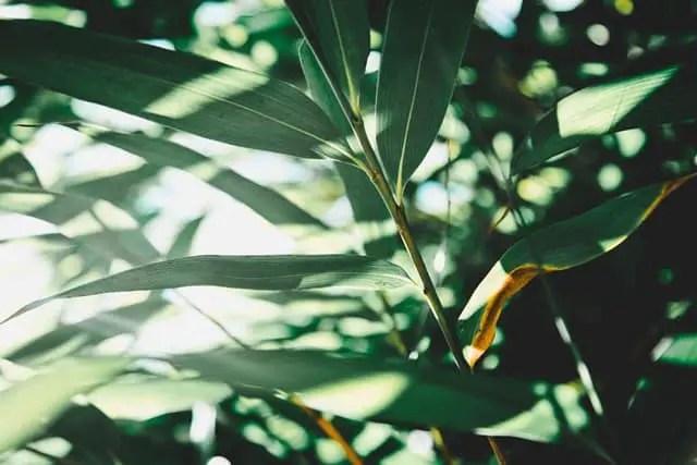 how-do-plants-use-glucose