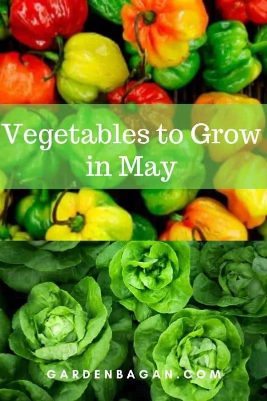 Vegetables to Grow in May