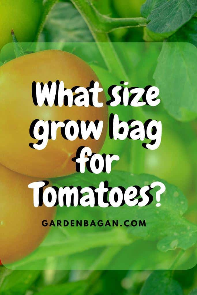 What size grow bag for Tomatoes