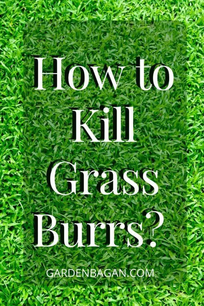 How to Kill Grass Burrs