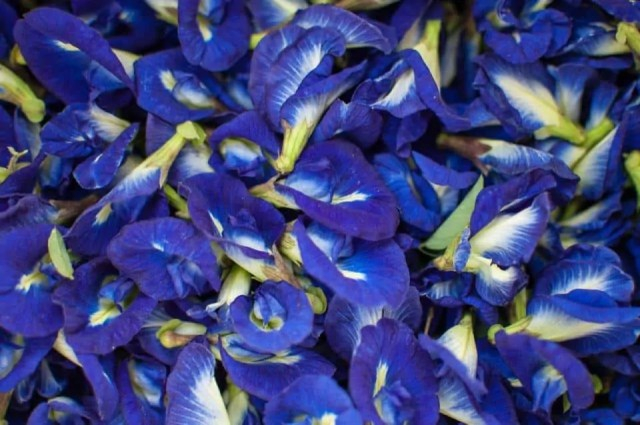 Beautiful-blue-pea-aparajita-pigeonwings