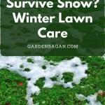 Can Grass Survive Snow_ Winter Lawn Care