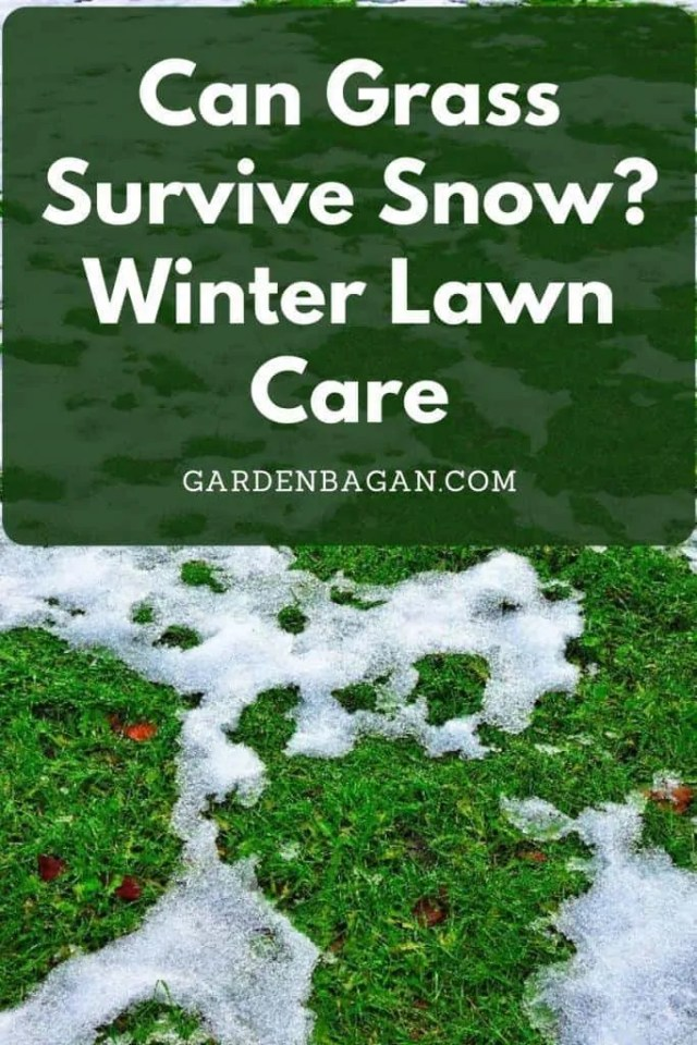 Can Grass Survive Snow_ Winter Lawn Care