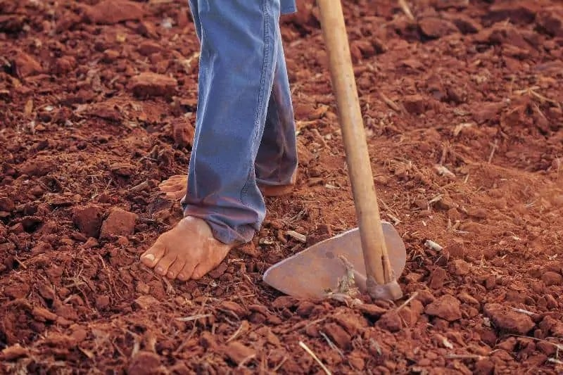 why gardeners fail-improper soil managements