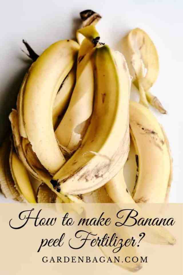 How to make Banana peel Fertilizer