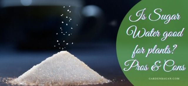 is-sugar-water-good-for-plants