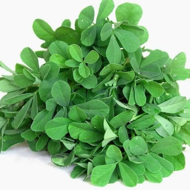grow-Methi-Kasturi-Fenugreek