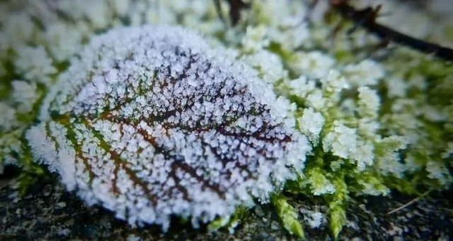 How to prepare your garden Winter