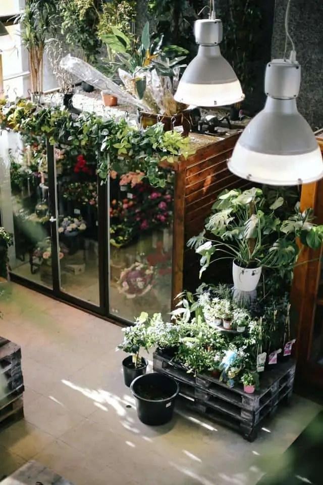 grow plants indoor using grow light