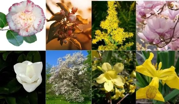 Official Flowers of South-Eastern States