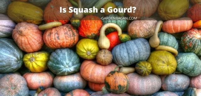 Is squash a gourd