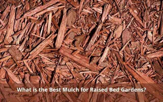 What is the Best Mulch for Raised Bed Gardens