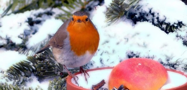 Garden Works to do in Winter- feed birds and animals