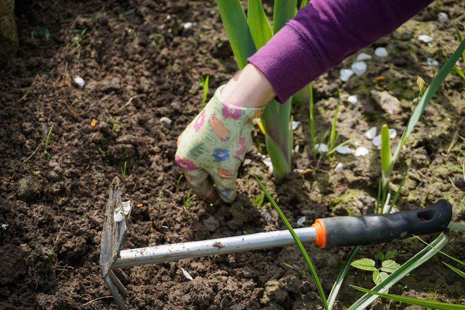 A gardener with gloved hands and a multi-tool removes weeds from a flowerbed.
