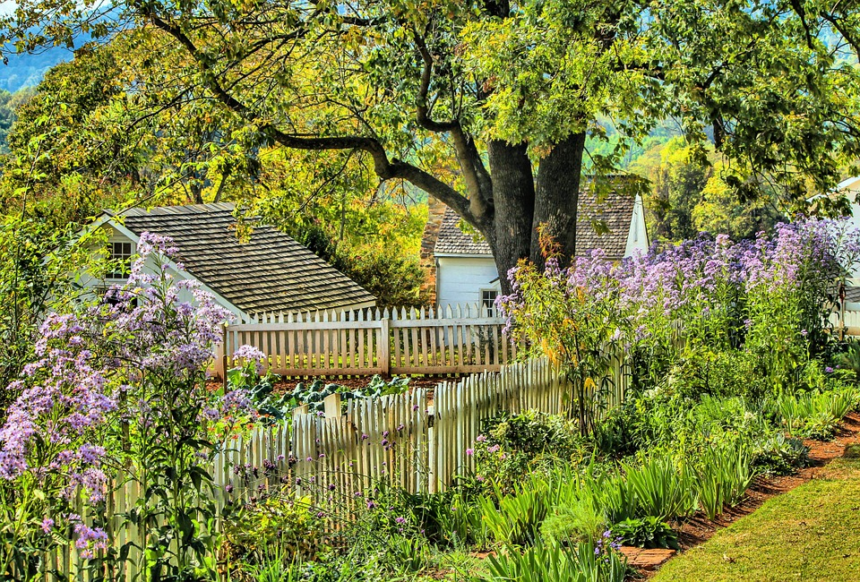 Purple flowers and other greenery planted along a white picket fence looking into a backyard garden with other plants growing.