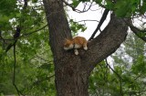 """Help me, I'm a cat stuck in a tree"""