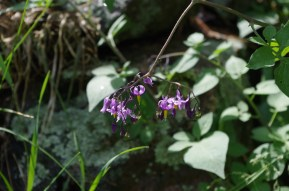 And blooms of evening nightshade - so delicate...