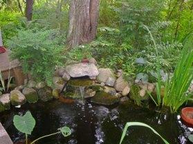 Woodland Pool