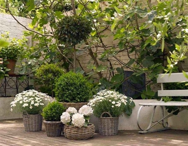The 25+ Best Ideas About Small Courtyard Gardens On Pinterest with regard to Garden Designs For Small Courtyard Gardens