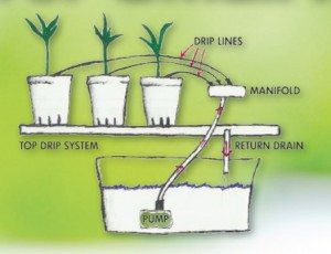 Basic Drip System Hydroponics for Small Apartments