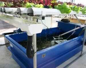 Homemade Aquaponics System
