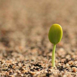 Good germination depends greatly on properly seed storage.