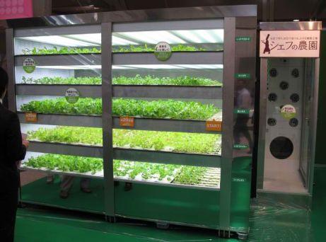 Hydroponic Lettuce Machine