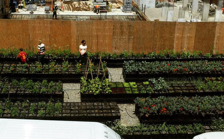 Mobile Urban Farming: Bowery Project, Toronto