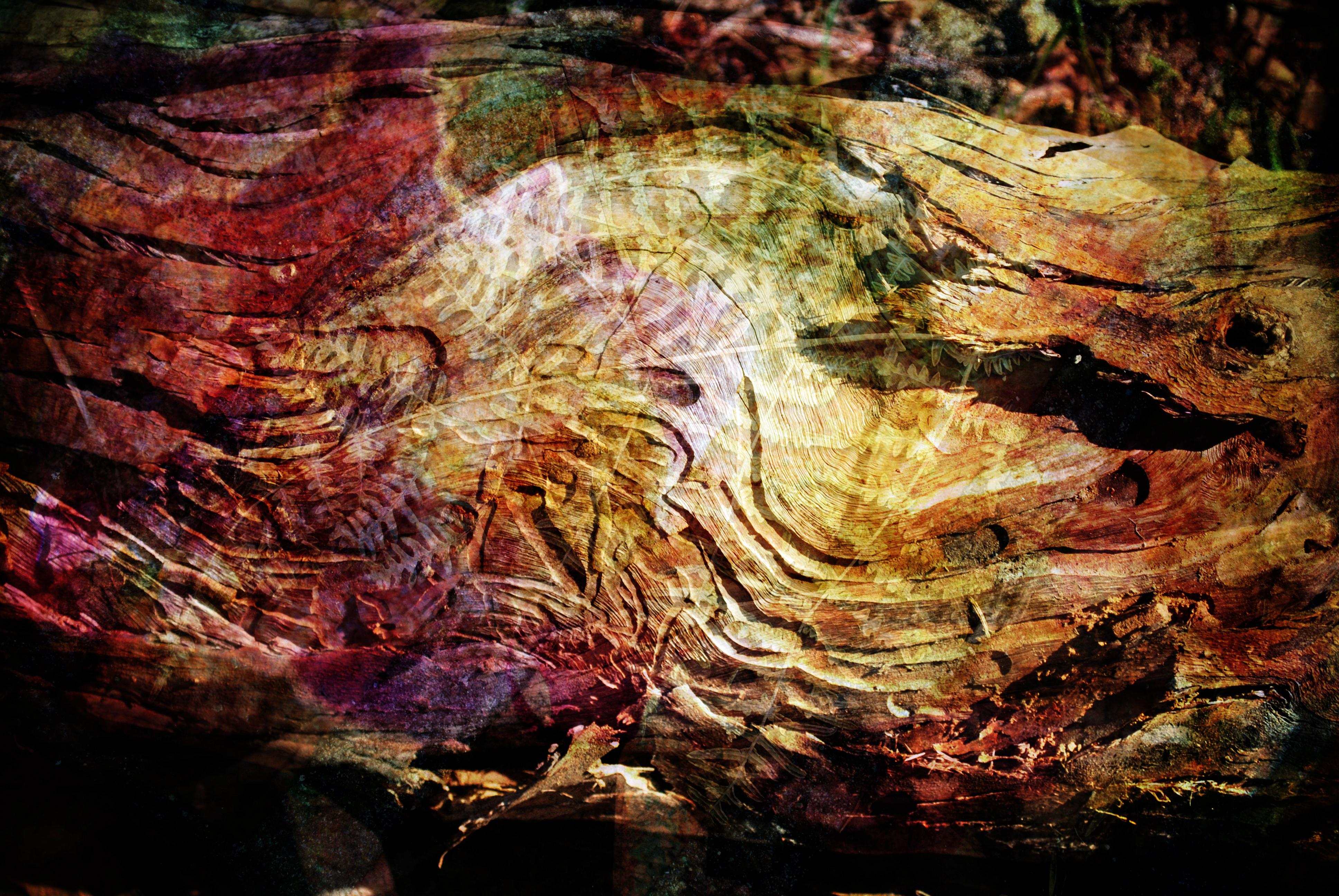 Fallen tree fern collage