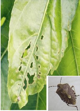 Garden pests and identification -6 - Garden Diary