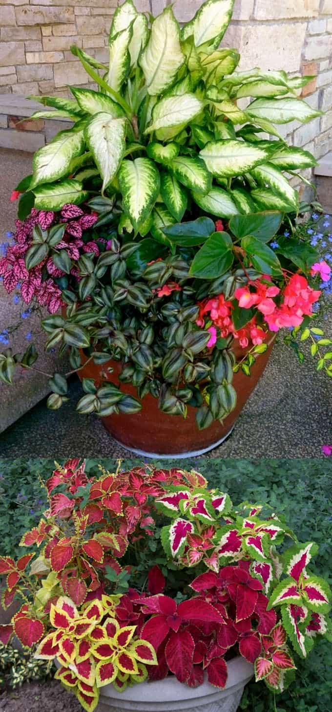 A Gallery of Beautiful Container Garden Ideas on Tree Planting Ideas For Backyard id=81573