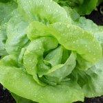 fertilizing your fall garden