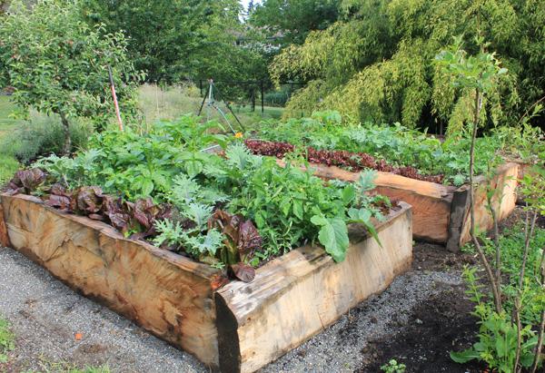 Raised Bed Gardening: Beginner's Guide