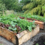Raised Bed Gardening: Beginner's Guide