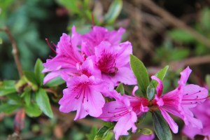 15 Classic Southern Flowering Perennial Plants