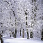 Understanding Hardiness Zones and frost Dates