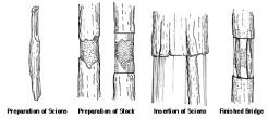 Bridge grafting technique *