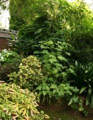 GardenDrum CStewart iGarden foliage plants dor deep, dry shade