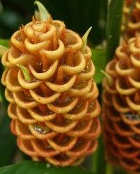 Stringybark Cottage - beautiful beehive ginger