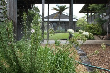 Yandina Station - the herb garden keeps the chef happy