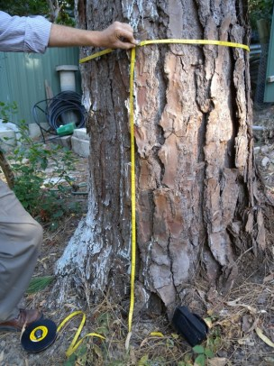 Tree removal applications require a measurement of the tree trunk girth at 1m high